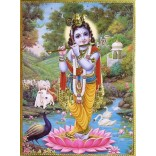 Krishna on Lotus